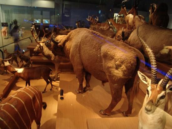 Museum Sejarah di area Taman Ueno