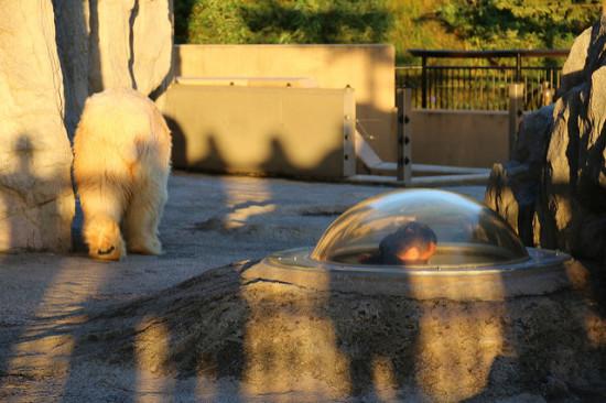 beruang kutub di asahikawa