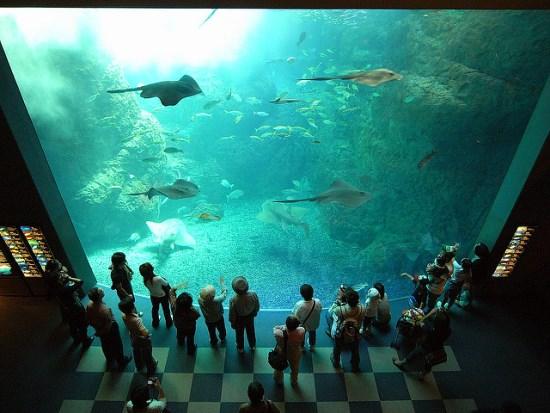 Akuarium raksasa Shin Enoshima Akuarium