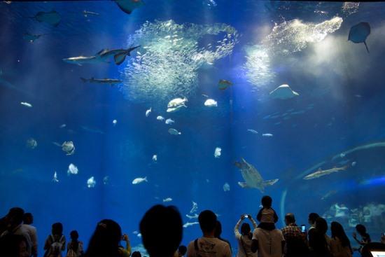 Akuarium raksasa di Aqua World Oarai