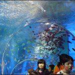 Akuarium raksasa di Yokohama Sea Paradise