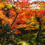 Alasan pergi ke Jepang saat musim gugur