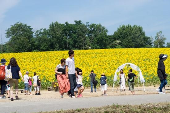 Anak-anak menyaksikan Festival Bunga Matahari Hokuryu