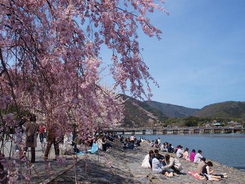 Menikmati musim semi di Arashiyama