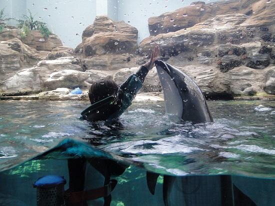 Atraksi lumba-lumba di Osaka Akuarium Osaka