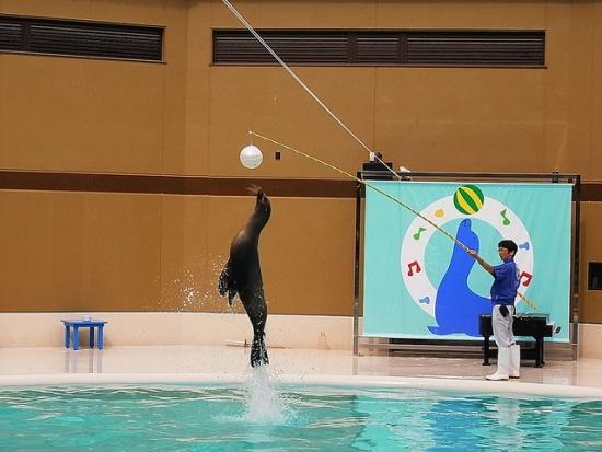 Atraksi singa laut di Miyajima Aquarium
