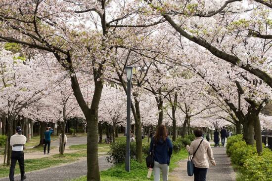 Berkeliling Kema Sakuranomiya di Osaka