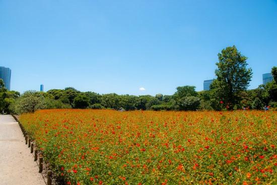 Bunga-bunga di Taman Hama Rikyu