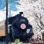 Bunga sakura dan Kereta Batubara Oikawa