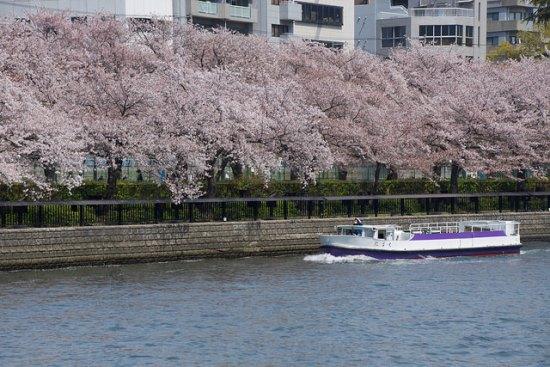 Bunga sakura dari Aqua Bus Osaka
