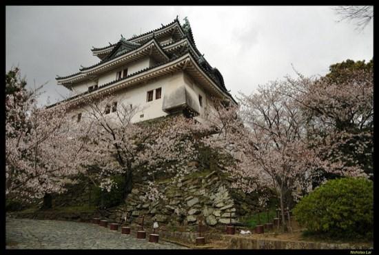 Bunga sakura di Kastil Wakayama