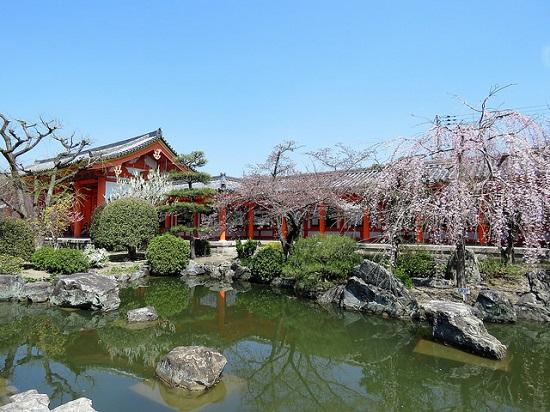 Bunga sakura di Kuil Sanjusangendo