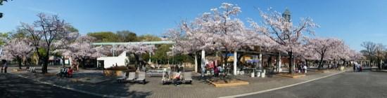 Higashiyama Park Sakura 2020