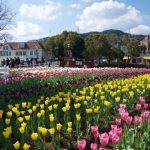 Bunga tulip di Huis Ten Bosch Nagasaki