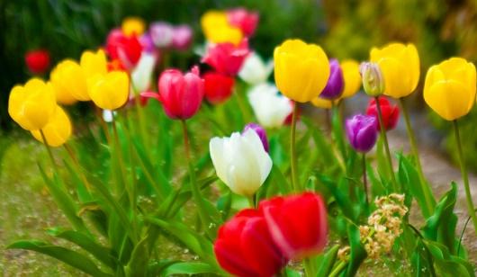 Bunga warna-warni di musim semi