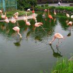 Burung flamingo di Tobu Zoo