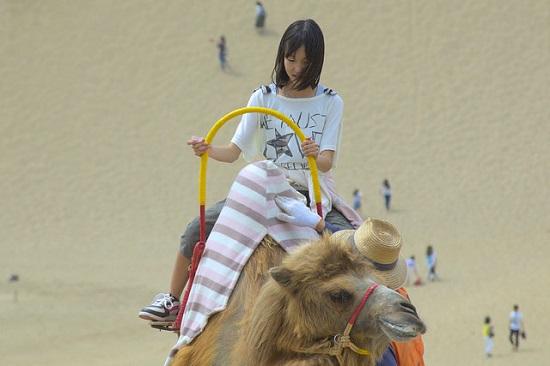 Coba naik unta di Tottori Sand Dunes