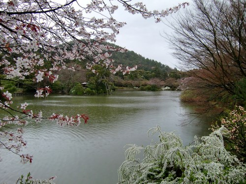 Danau di kompleks Kuil Ryoanji