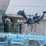 Dolphin Show dii Akuarium Nagoya