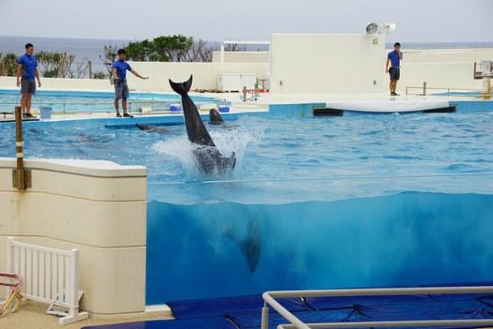 Dolphin show di Akuarium Churaumi