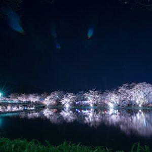 Festival Bunga Sakura di Garyu Park Nagano