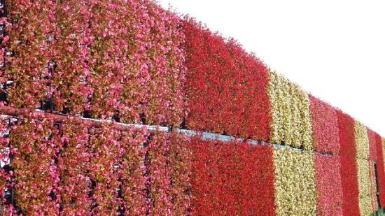 Festival Niagara Bunga saat musim panas di Oishi Park