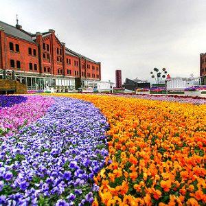 Festival bunga di Yokohama Akarenga Soko