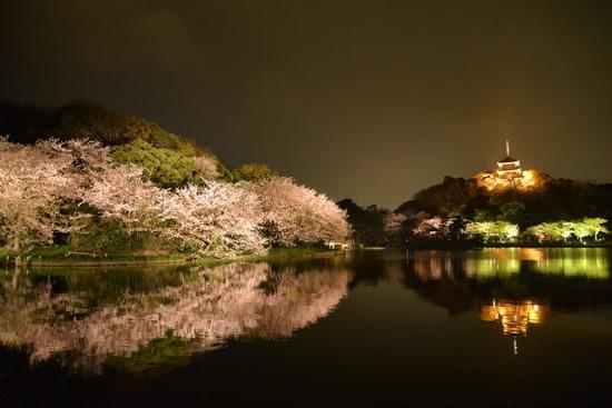 Festival bunga sakura di Taman Sankeien