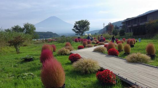 Flower road di Oishi Park