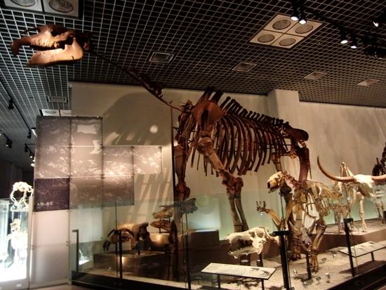 Fosil Dinosaurus di Museum Nasional Alam dan Sains Tokyo