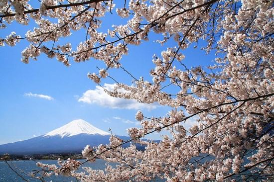 Gunung Fuji dan Sakura