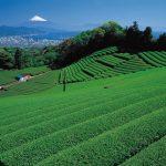 Gunung Fuji dari Nihondaira Shizuoka