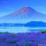 Gunung Fuji dari Taman Yagisaki di Kawaguchiko