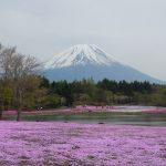 Gunung Fuji dengan karpet merah jambu Shibazakura