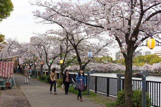 Hanami bunga sakura di Kema Sakuranomiya