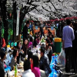Hanami di Taman Ueno
