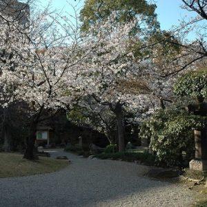 Hanami sakura di Taman Gokurakujudo Kuil Shitennoji
