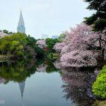 Hanami sakura di Taman Shinjuku Gyoen Tokyo