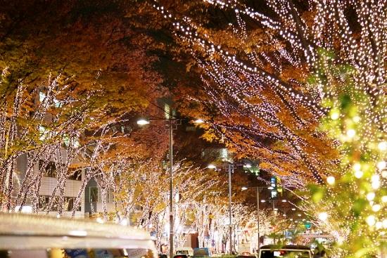 Iluminasi Musim Dingin di Omotesando Harajuku