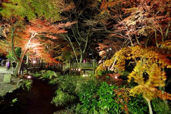 Iluminasi malam di Atami Plum Garden