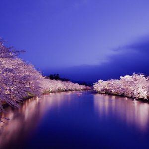 Iluminasi sakura di Kastil Hirosaki