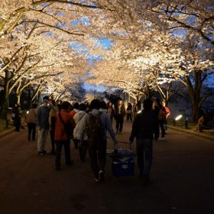 Iluminasi sakura di Taman Bampaku Kinen Koen