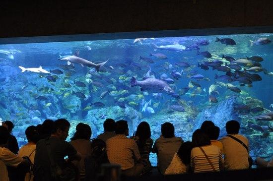 Info Wisata di Beppu Akuarium Umitamago