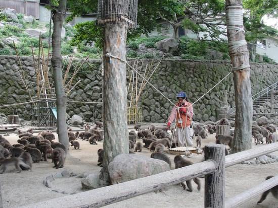 Info Wisata di Beppu Takasakiyama Monkey Park