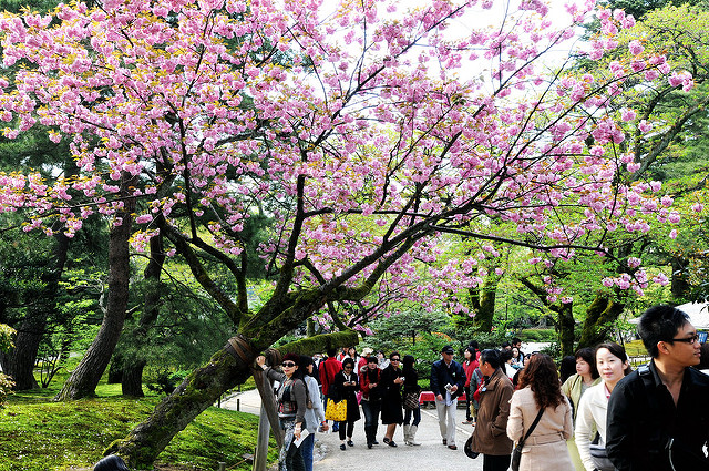 Info Wisata di Kanazawa Taman Kenrokuen