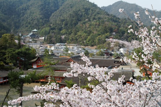 Itsukushima Shrine sewaktu Miyajima Sakura 2020