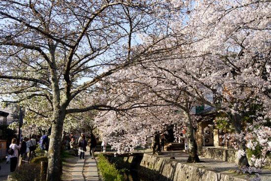 Jalan Tetsugaku no Michi waktu Liburan di Kyoto