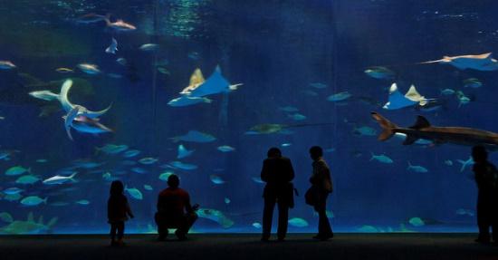 Kagoshima Akuarium