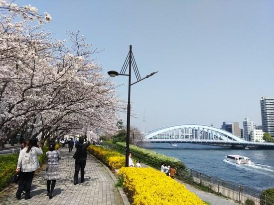 Kapal Wisata dan sungai Sumida waktu Sumida Park Sakura 2020