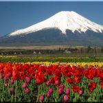 Kebun bunga Hananomiyako di musim semi